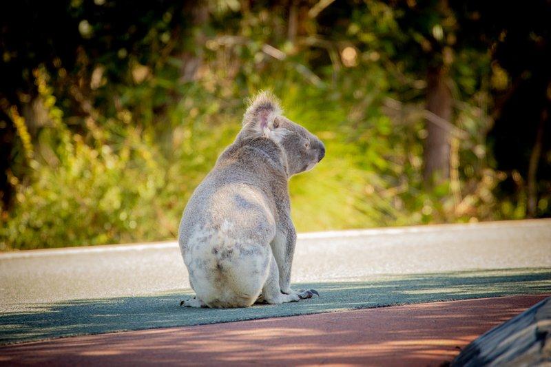 Photo by Mandy-Keasey-Wildcare-Australia